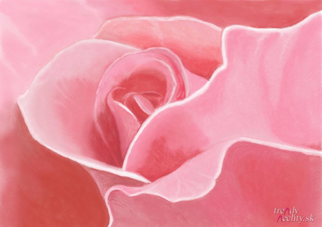 Ruža & Pink rose