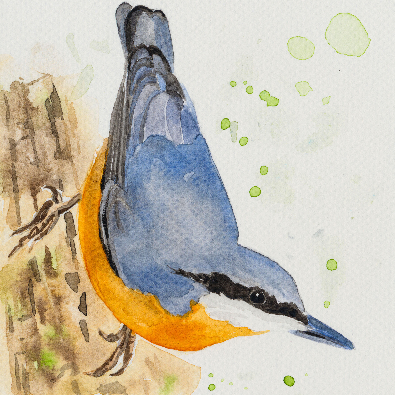 Sýkorky a iné vtáčiky & akvarel
