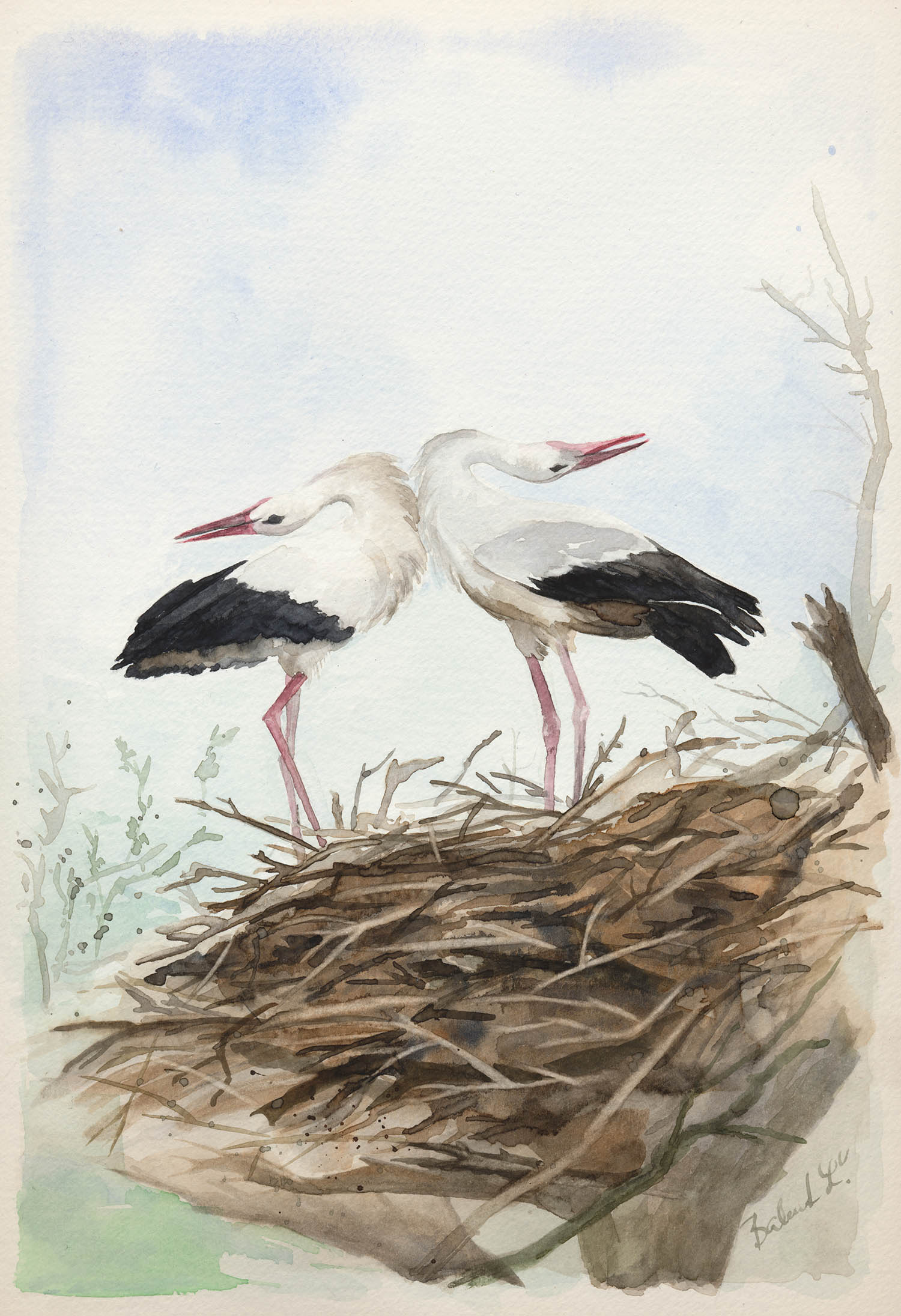 Bociany – akvarel