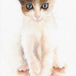 Mačka – akvarel
