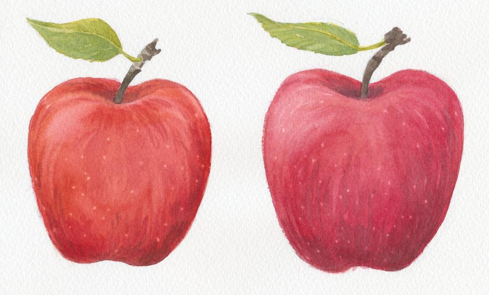 Akvarelový obrázok jabĺk
