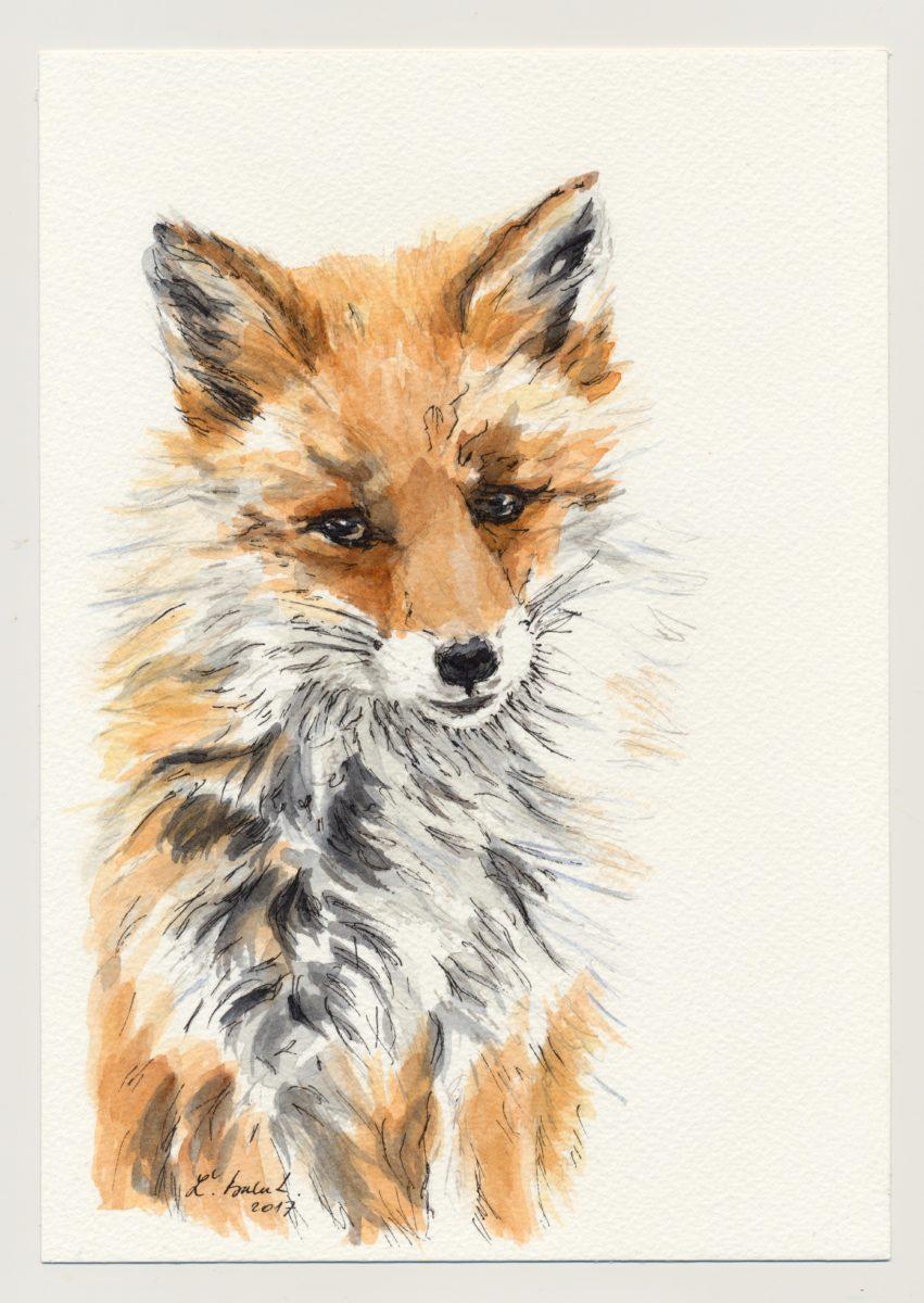 Líška nakreslená perom a tušom. Kresba doplnená akvarelovými farbami
