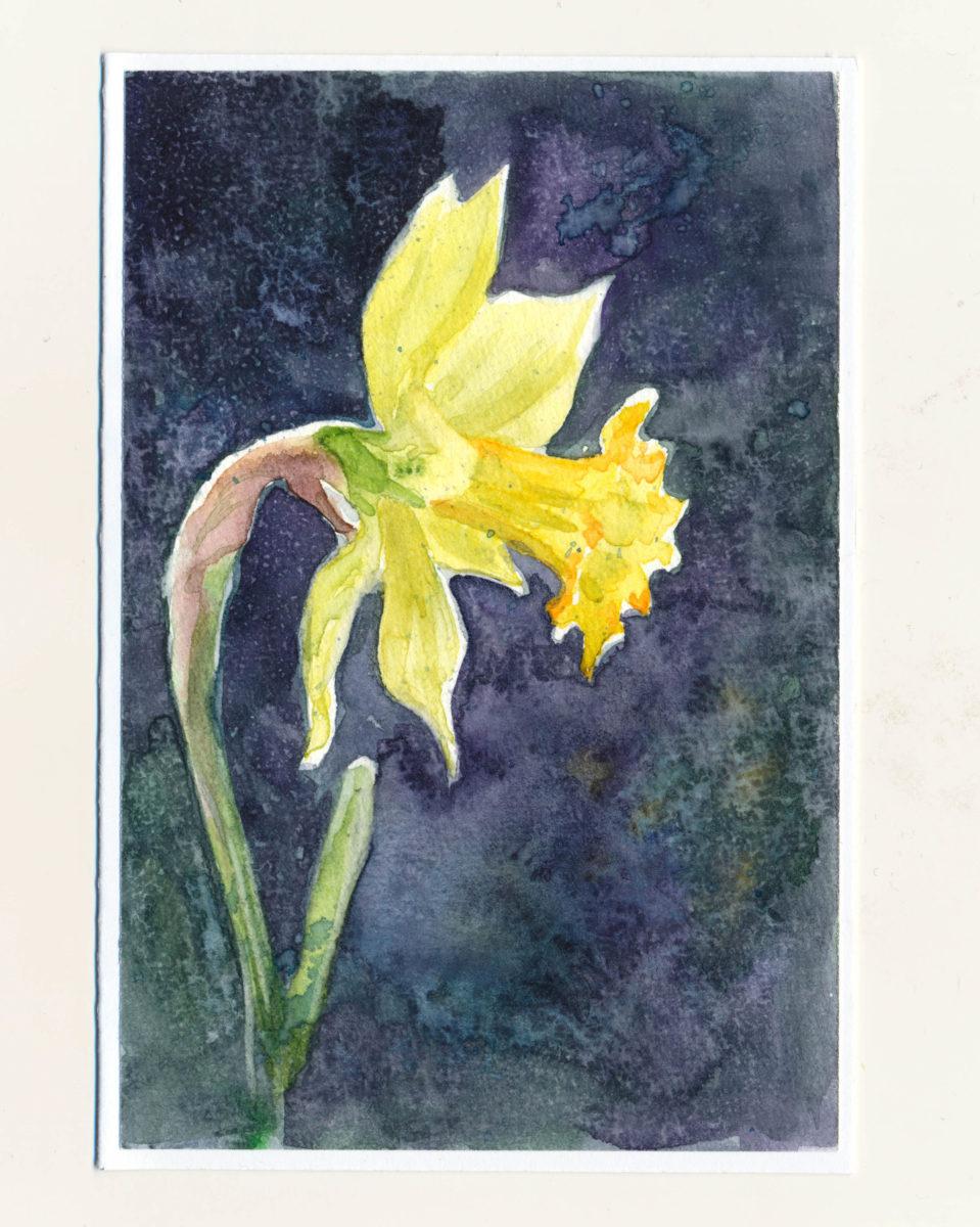 Ručne maľovaná pohľadnica - Narcis na tmavo modrom pozadí