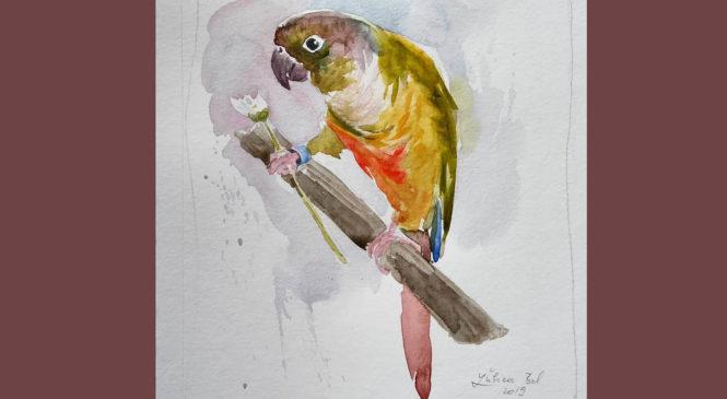 Papagájik a sedmokráska